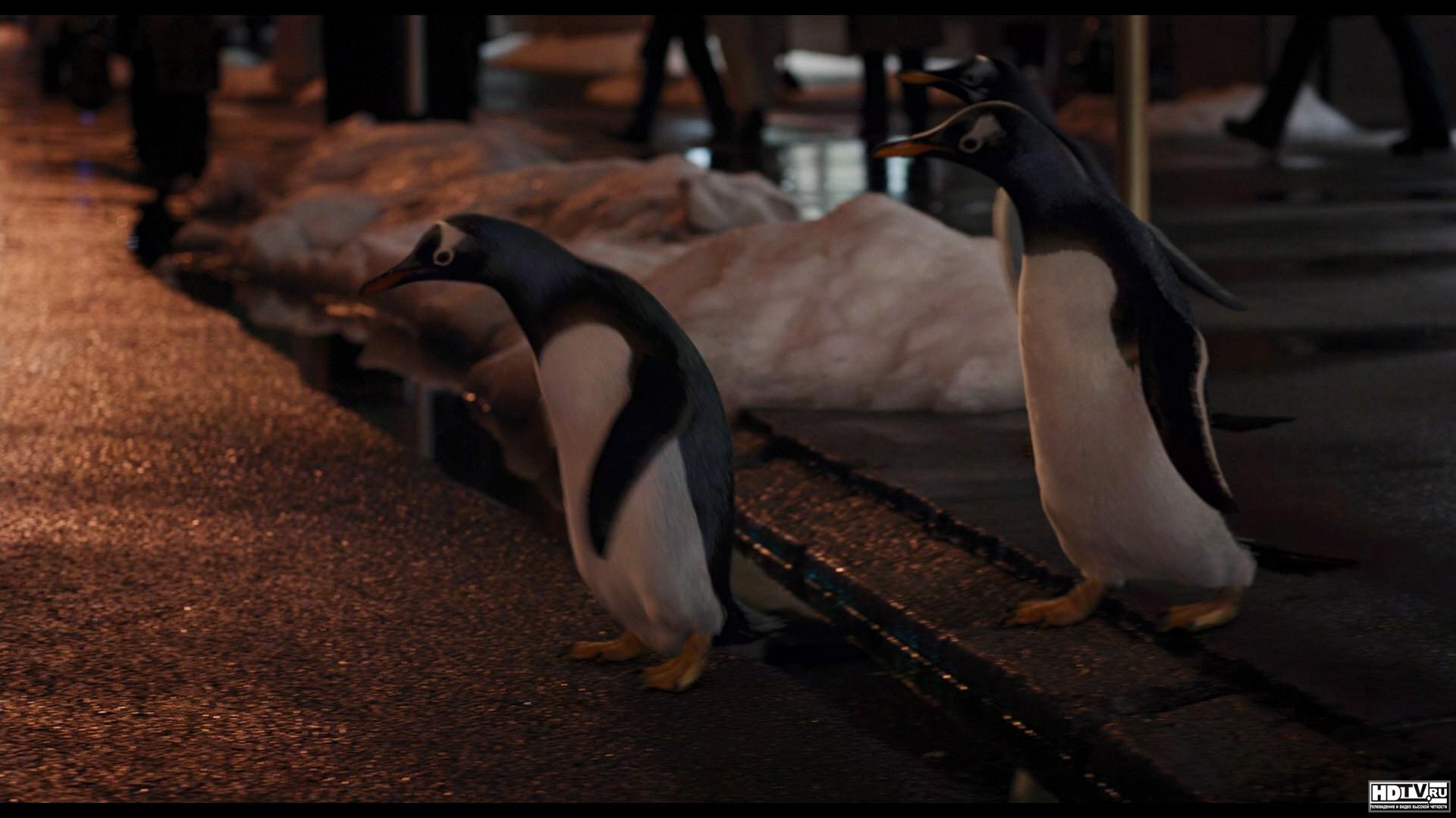фильм пингвины мистера поппера качество 720